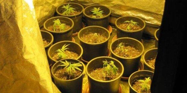 Cannabis-Geruch verriet überforderte Mutter