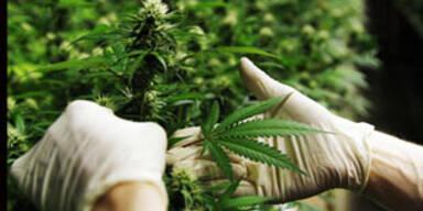 Jahrelange vermutliche Drogendealer festgenommen