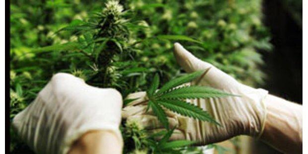 3,335 Kilo Cannabis bei Autoraser gefunden
