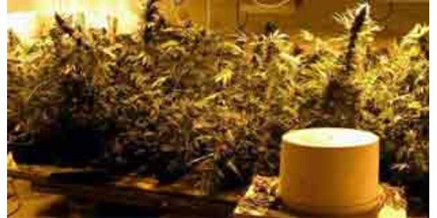 Geheime Cannabisplantage im Naherholungsgebiet