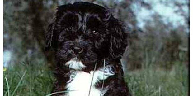 Sasha und Malia Obama haben ihren Hund