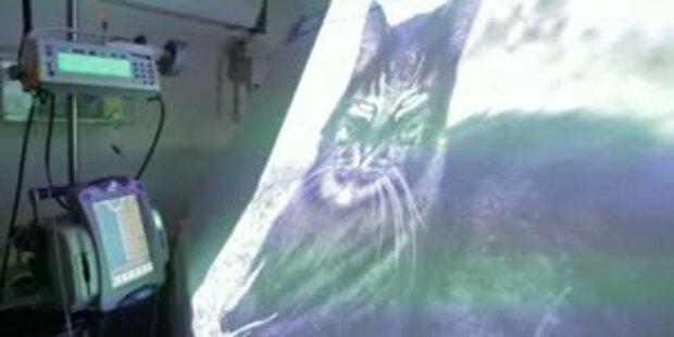 Das süssteste Katzenprojekt der Welt
