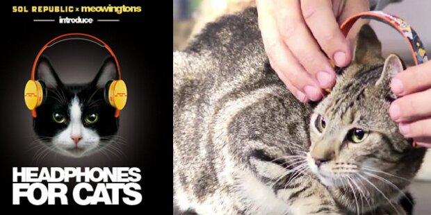 Erster Kopfhörer für Katzen am Markt