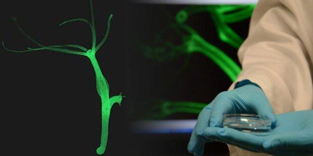 Forscher entdecken Unsterblichkeits-Gen
