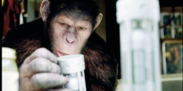 Ein cleverer Primat begeistert