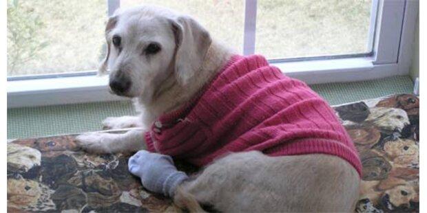 Ältester Hund der Welt gestorben