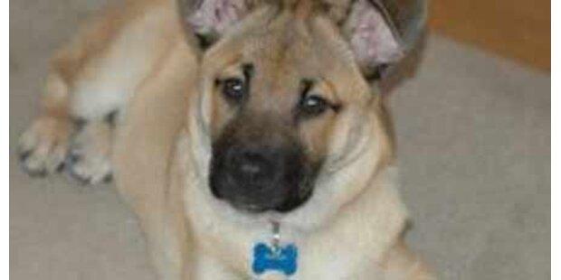 Neugeborenes von Familienhund getötet