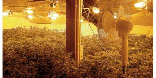 Einbrecher verrät Hasch-Plantage