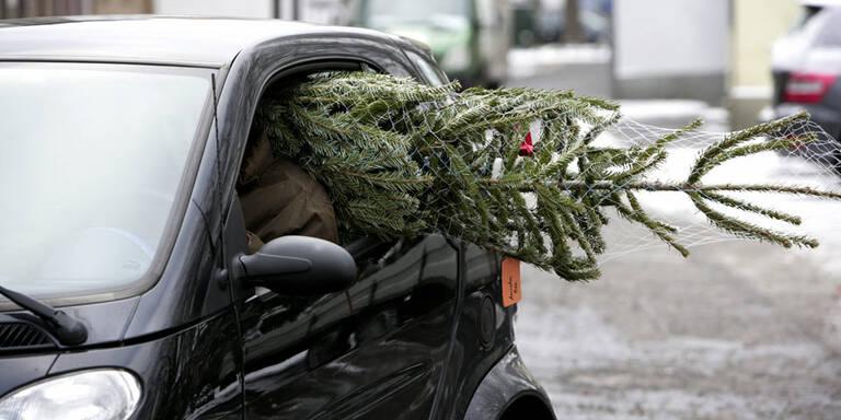 Falscher Christbaum-Transport kann teuer werden