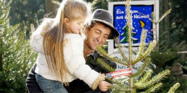 Tipps für den Christbaum-Kauf
