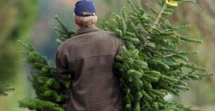 Die Kunst des Baum-Kaufens