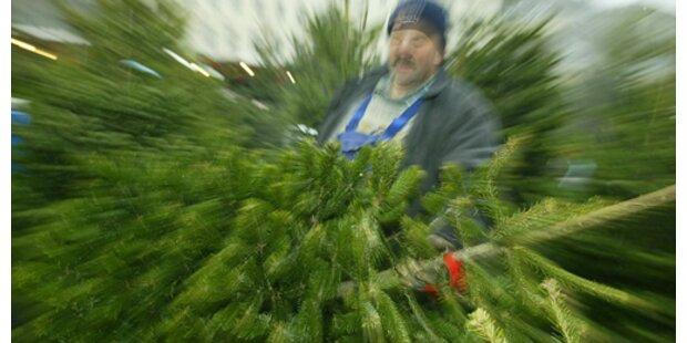 Wien sammelt wieder Christbäume