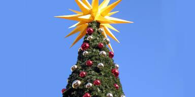 Preis für heimische Christbäume heuer stabil
