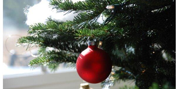 Im Weihnachtsbaum kann eine Zecke lauern