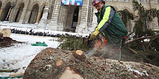 Wiener Christbaum wird Fledermausbehausung