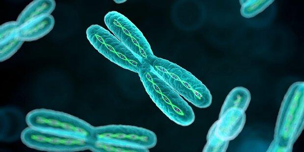 Nasmyth erforscht Chromosomentrennung