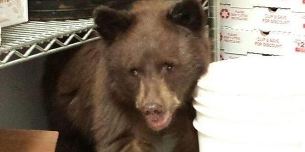 Bärenbaby schläft in Pizzeria ein