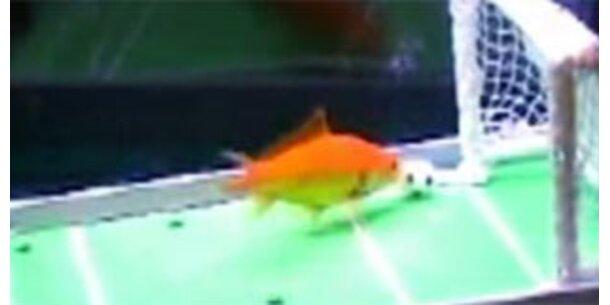 Der klügste Goldfisch der Welt