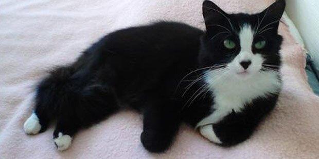 Katze wandert 1.000 Kilometer zu Frauchen