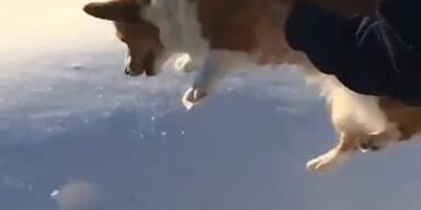 Wirft hier jemand einen Hund aus Jet?