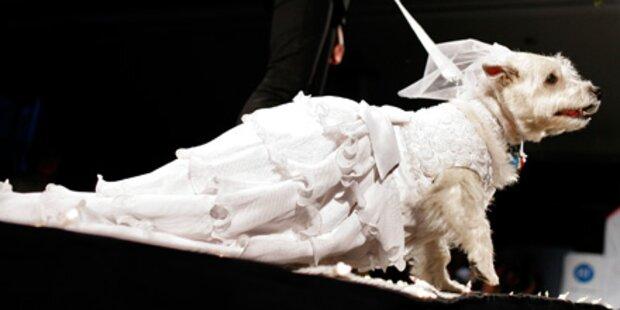 Designer-Fashion - auf den Hund gekommen