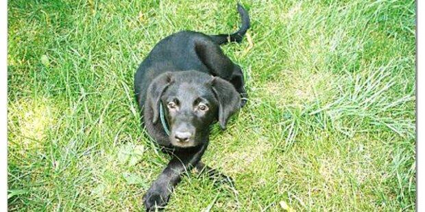 Vermisster Hund nach 6 Jahren wieder gefunden