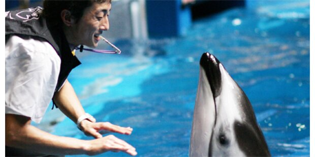 Ein tolpatschiger Delfin verzückt Japan