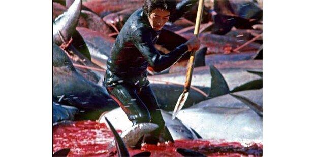 Japan schlachtet Tausende Delfine ab