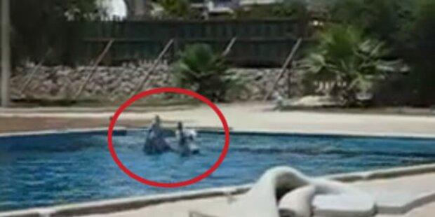 Türkisches Hotel hält Delphine im Pool