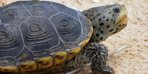 Schildkröten stürmen Flughafen