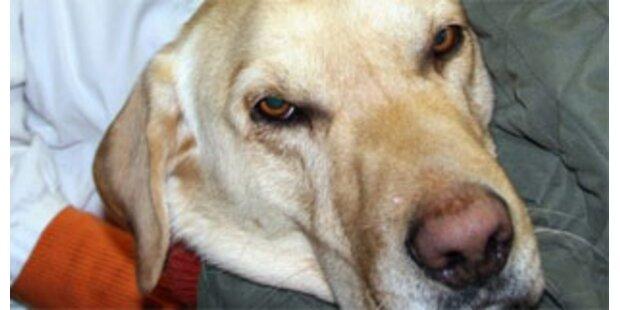 Hund in OÖ von Germteig betrunken