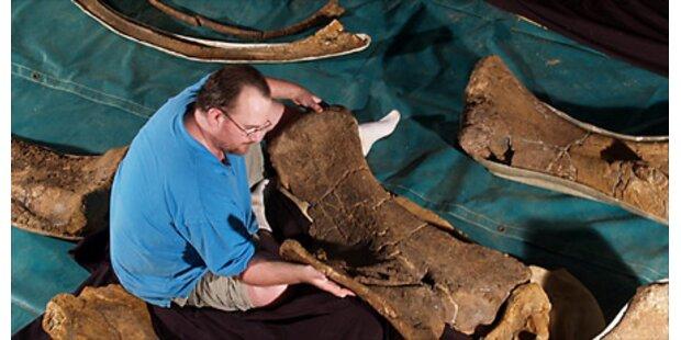 Forscher finden drei neue Dino-Arten