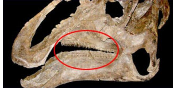 Dinosaurier mit 800 Zähnen