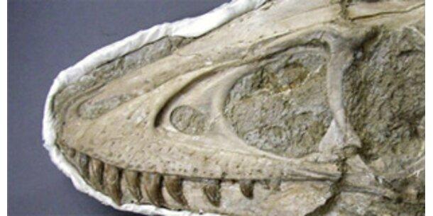 Dinosaurier-Skelett in Wüste Gobi ausgegraben