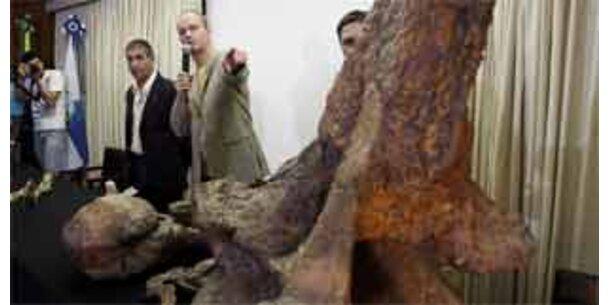 Skelett eines unbekannten Riesensauriers entdeckt