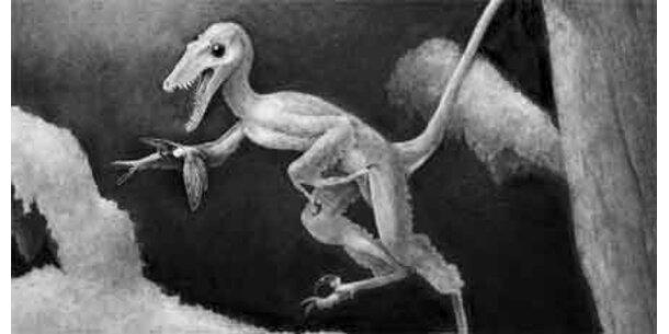 Fleischfressender Mini-Dino entdeckt