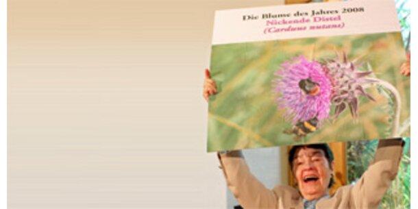 Nickende Distel ist Blume des Jahres 2008