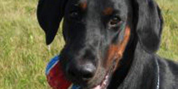 Hund nach Strychnin-Köder in Lebensgefahr
