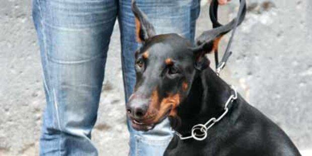 Betrunkener hetzte Dobermann auf Polizei