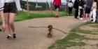 Dieser Hund zeigt uns wie social distancing funktioniert