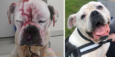 Bulldogge 'Smiler' geht es wieder besser
