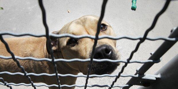 38 Hunde verhungert: Gnadenhof-Betreiberin verurteilt