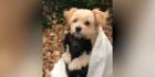 Die beiden Hunde kuscheln unter der Decke um warm zu bleiben
