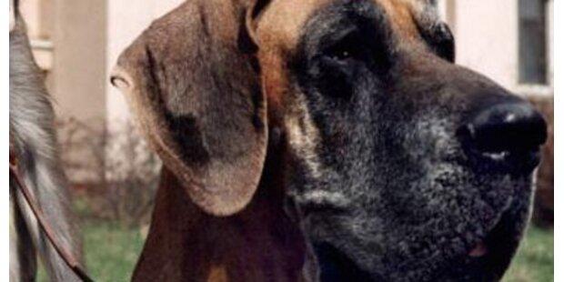 Mann legte gefährliche Hunde-Köder aus