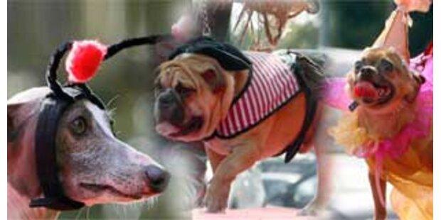 Kleider machen Hunde