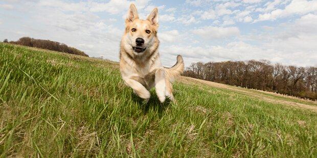 Sachkundenachweis für Wiener Hundebesitzer