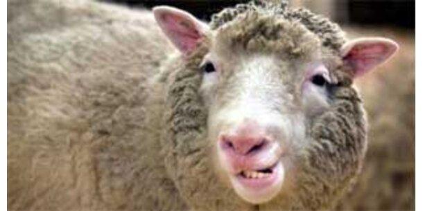 Schöpfer von Klon-Schaf Dolly wechselt Methode
