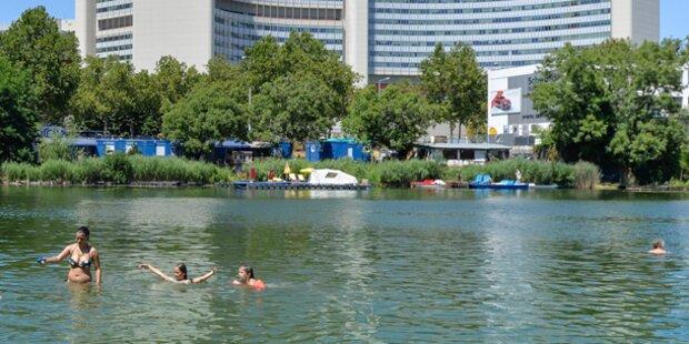 Quallen-Plage in der Alten Donau?