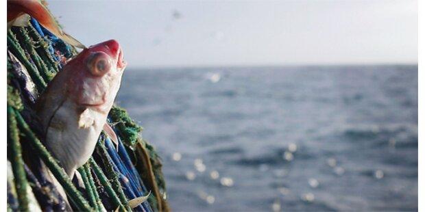 Norweger fängt 25-Kilo-Dorsch