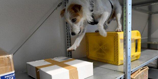 1,5 Kilo Drogen in Post-Paketen entdeckt